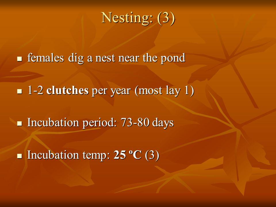 Nesting: (3) females dig a nest near the pond females dig a nest near the pond 1-2 clutches per year (most lay 1) 1-2 clutches per year (most lay 1) Incubation period: 73-80 days Incubation period: 73-80 days Incubation temp: 25 ºC (3) Incubation temp: 25 ºC (3)