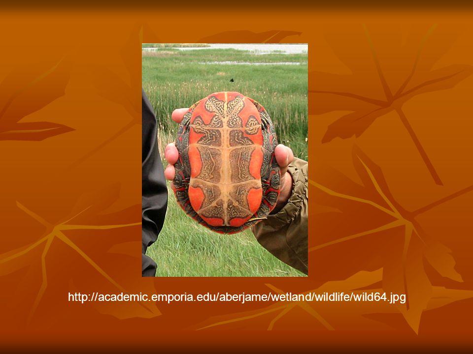 http://academic.emporia.edu/aberjame/wetland/wildlife/wild64.jpg