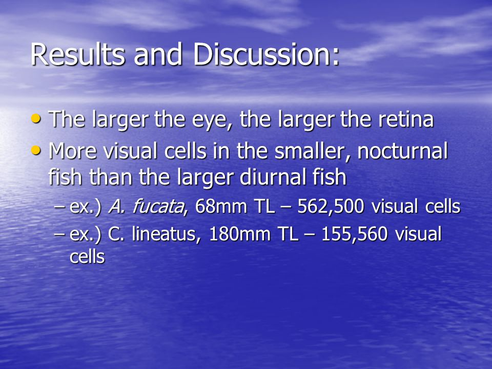 The larger the eye, the larger the retina The larger the eye, the larger the retina More visual cells in the smaller, nocturnal fish than the larger diurnal fish More visual cells in the smaller, nocturnal fish than the larger diurnal fish –ex.) A.