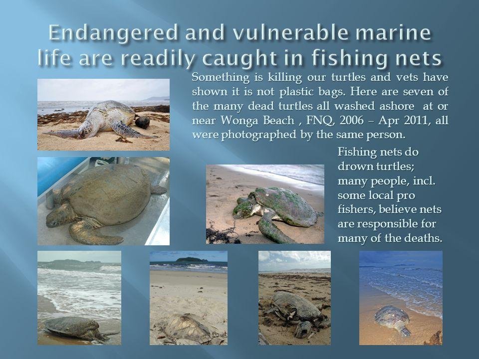 Something is killing our turtles and vets have shown it is not plastic bags.