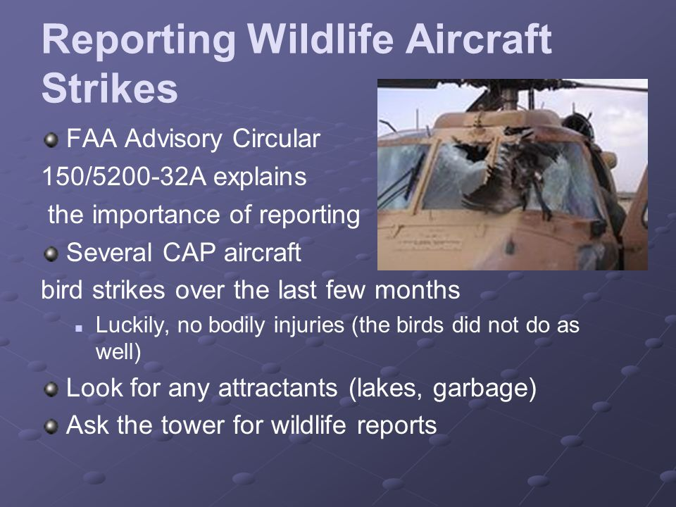 Reporting Wildlife Aircraft Strikes FAA Advisory Circular 150/5200-32A explains the importance of reporting Several CAP aircraft bird strikes over the