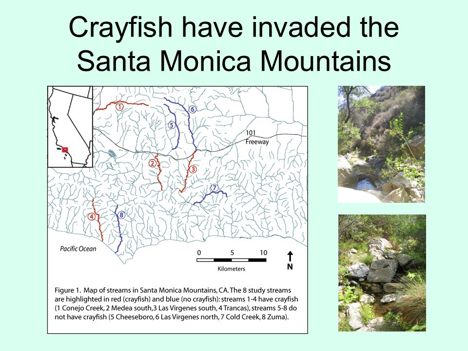Crayfish have invaded the Santa Monica Mountains