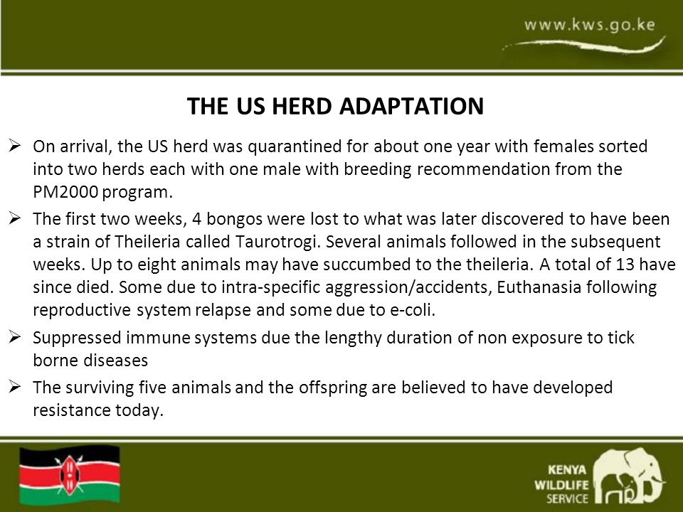 THE US HERD ADAPTATION  On arrival, the US herd was quarantined for about one year with females sorted into two herds each with one male with breedin