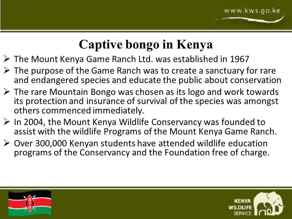 Captive bongo in Kenya  The Mount Kenya Game Ranch Ltd. was established in 1967  The purpose of the Game Ranch was to create a sanctuary for rare an