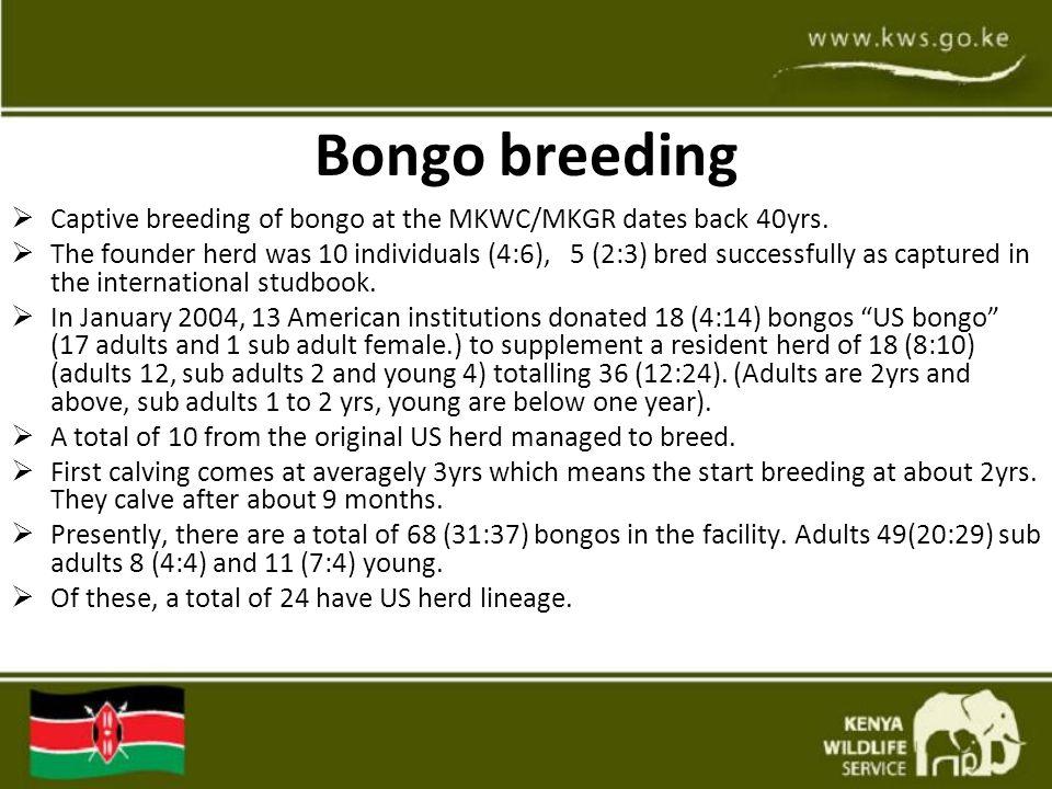 Bongo breeding  Captive breeding of bongo at the MKWC/MKGR dates back 40yrs.