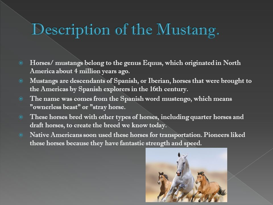 Horses/ mustangs belong to the genus Equus, which originated in North America about 4 million years ago.