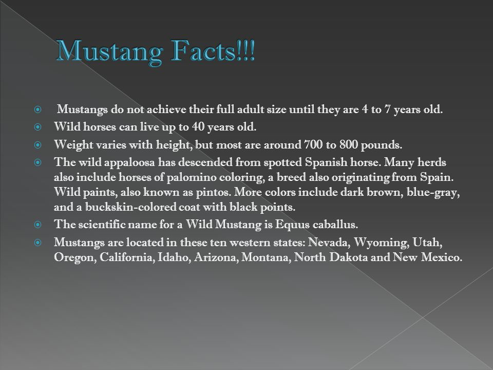  Mustangs do not achieve their full adult size until they are 4 to 7 years old.
