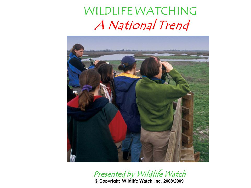 WILDLIFE WATCHING A National Trend Presented by Wildlife Watch © Copyright Wildlife Watch Inc.