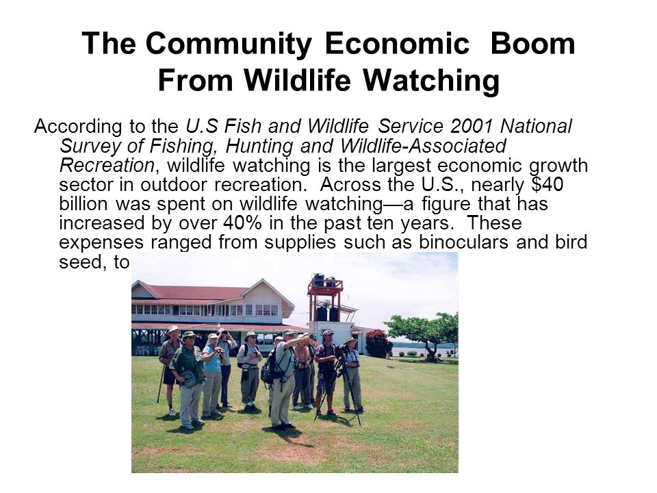 The Community Economic Boom From Wildlife Watching Cape May, New Jersey: More than 100,000 birders visit this area annually, providing a cumulative impact of nearly $10 million.