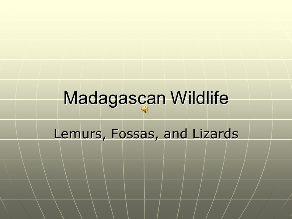 Madagascan Wildlife Lemurs, Fossas, and Lizards
