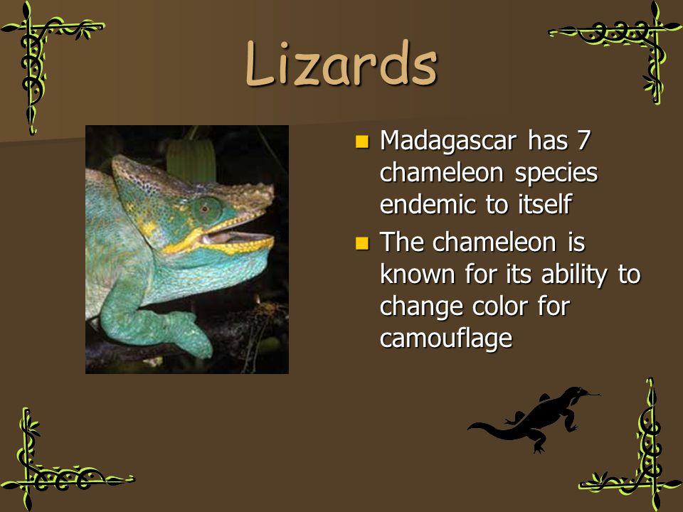 Lizards Madagascar has 7 chameleon species endemic to itself Madagascar has 7 chameleon species endemic to itself The chameleon is known for its abili