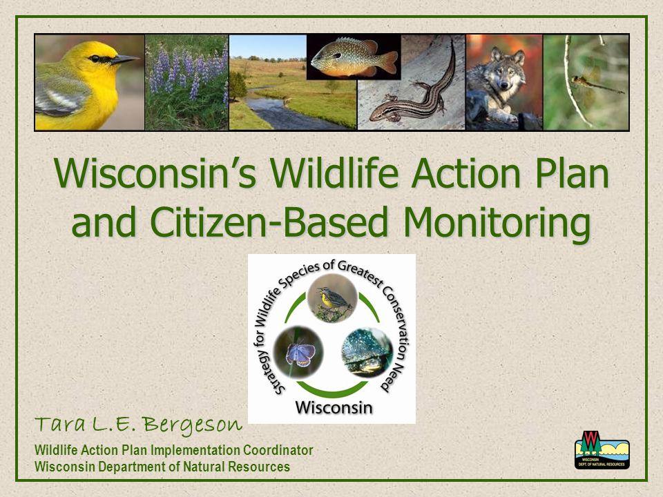 Wisconsin's Wildlife Action Plan and Citizen-Based Monitoring Tara L.E. Bergeson Wildlife Action Plan Implementation Coordinator Wisconsin Department