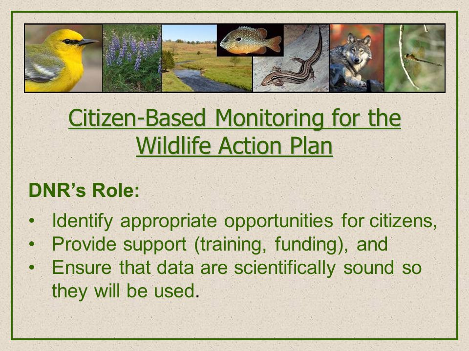 Citizen-Based Monitoring for the Wildlife Action Plan DNR's Role: Identify appropriate opportunities for citizens, Provide support (training, funding)