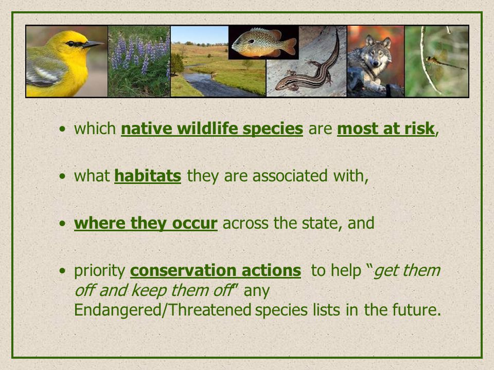 which native wildlife species are most at risk, what habitats they are associated with, where they occur across the state, and priority conservation actions to help get them off and keep them off any Endangered/Threatened species lists in the future.