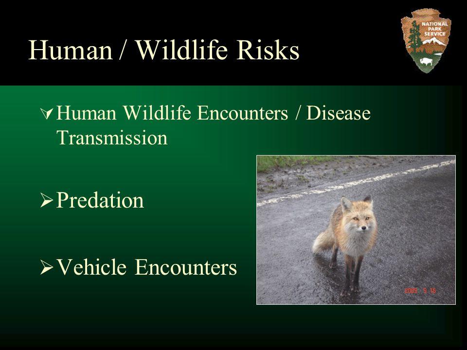 Human / Wildlife Risks  Human Wildlife Encounters / Disease Transmission  Predation  Vehicle Encounters