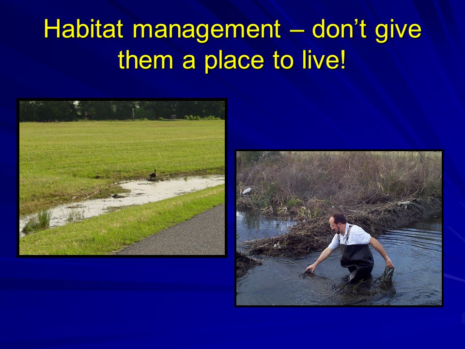 Habitat management – don't give them a place to live!