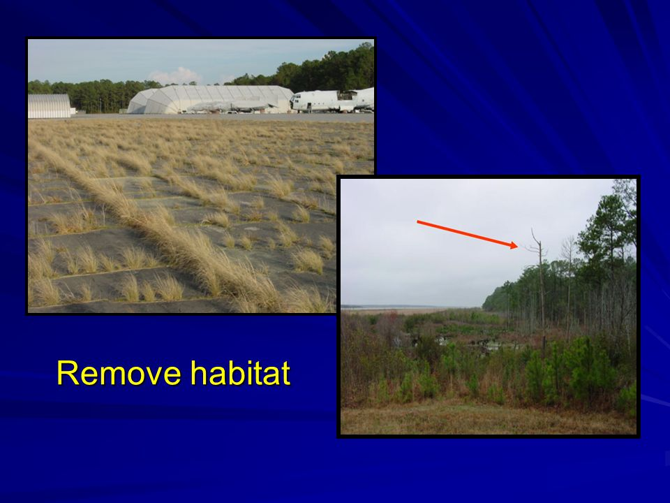 Remove habitat