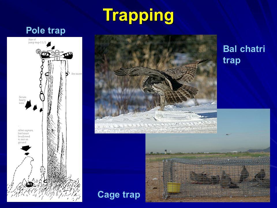 Trapping Pole trap Bal chatri trap Cage trap