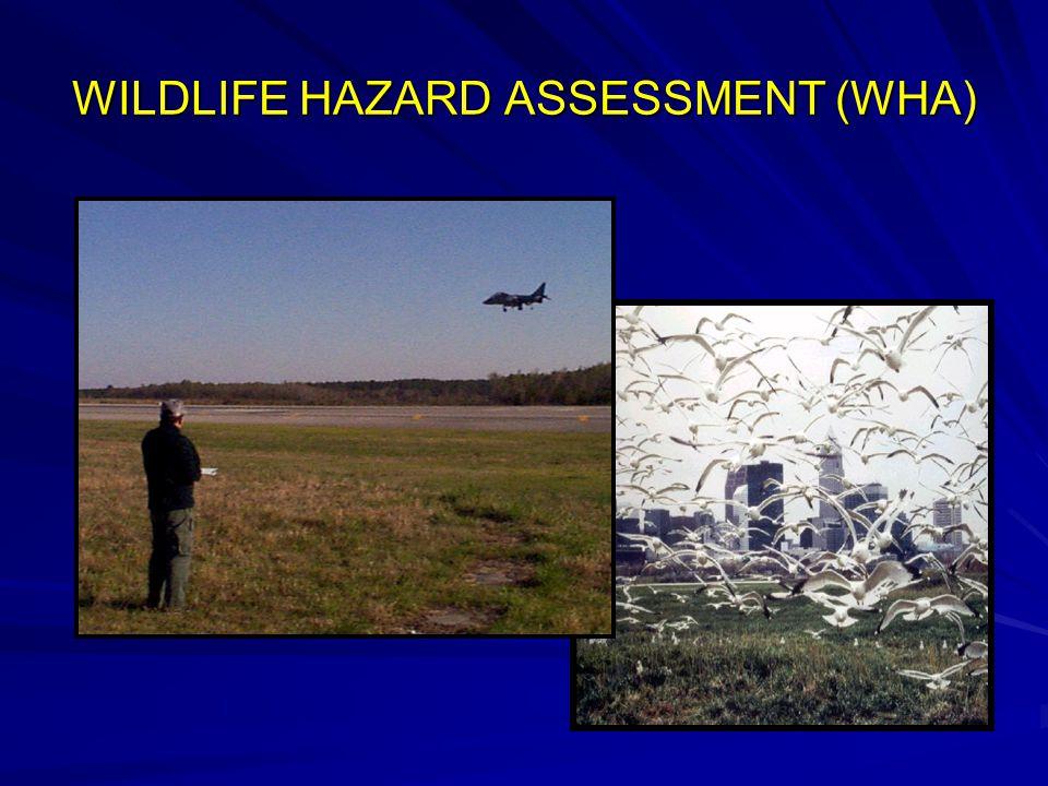WILDLIFE HAZARD ASSESSMENT (WHA)