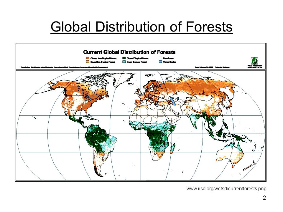 2 Global Distribution of Forests www.iisd.org/wcfsd/currentforests.png