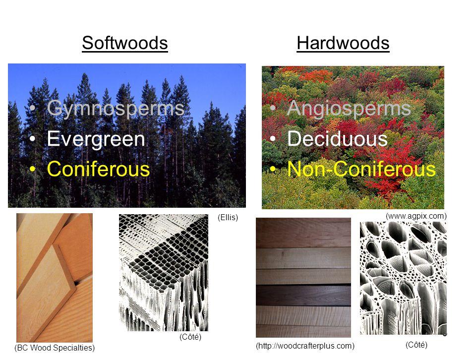 3 SoftwoodsHardwoods (www.agpix.com) (Ellis) (Côté) (BC Wood Specialties) (http://woodcrafterplus.com) Gymnosperms Evergreen Coniferous Angiosperms Deciduous Non-Coniferous