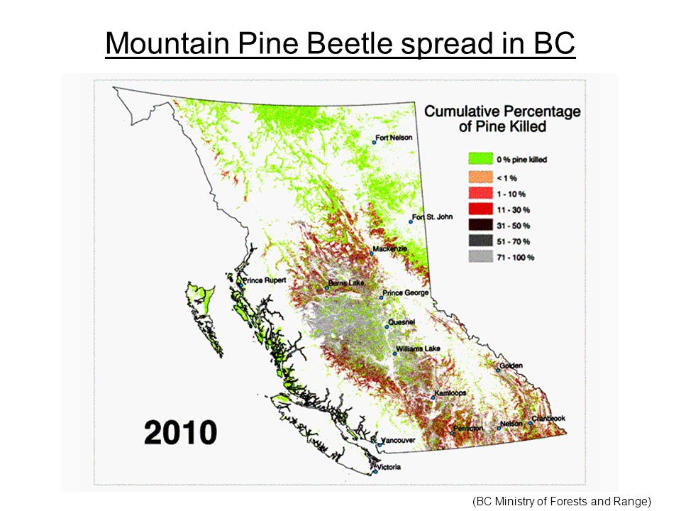 Mountain Pine Beetle spread in BC (BC Ministry of Forests and Range)