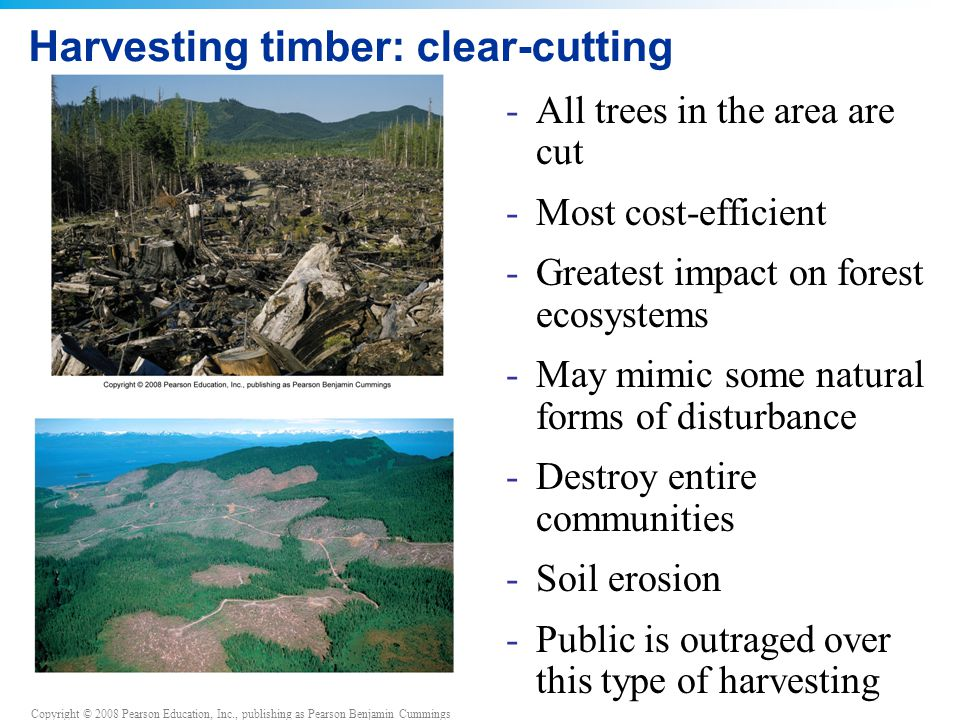 Copyright © 2008 Pearson Education, Inc., publishing as Pearson Benjamin Cummings Harvesting timber: clear-cutting -All trees in the area are cut -Mos
