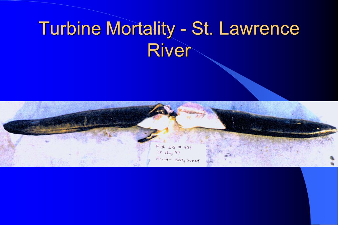 Turbine Mortality - St. Lawrence River