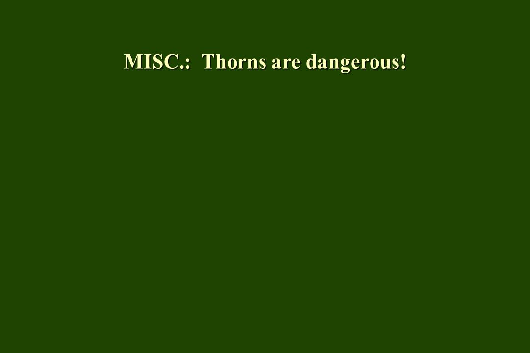 MISC.: Thorns are dangerous!