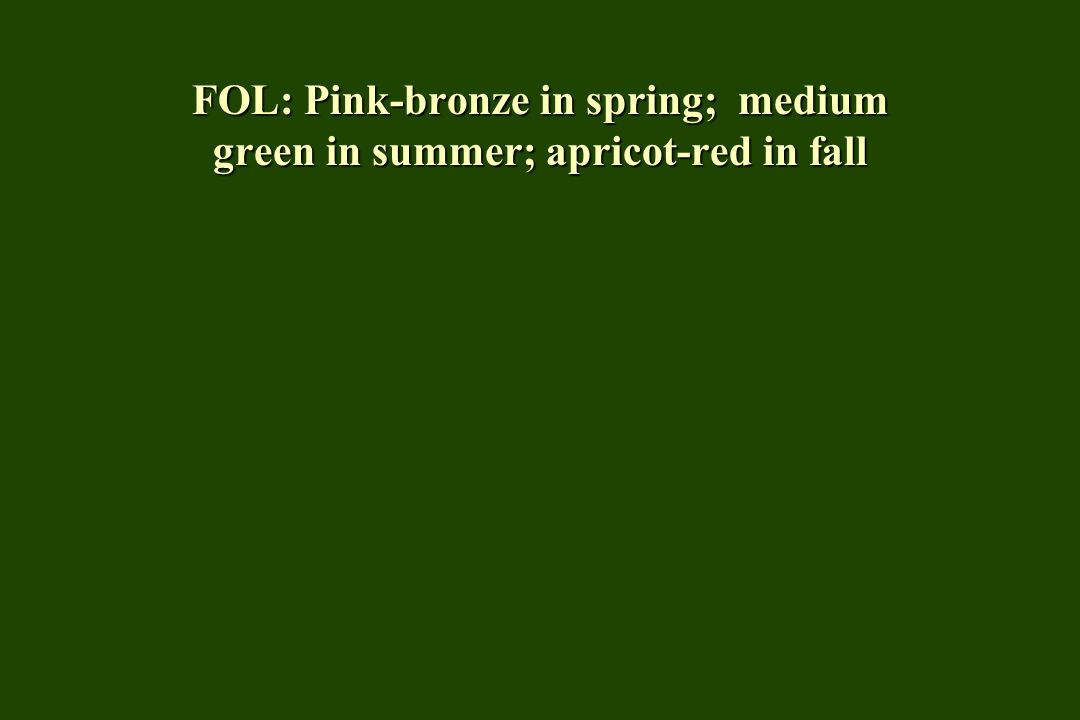 FOL: Dark green in summer; inconsistent fall color (yellow, red, purple)