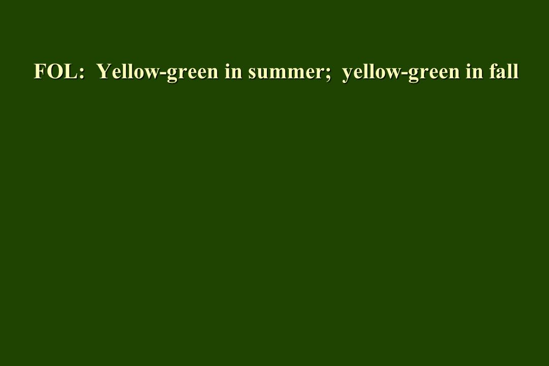 FOL: Yellow-green in summer; yellow-green in fall