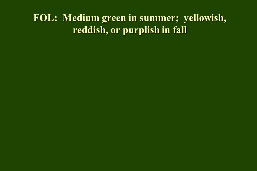 FOL: Medium green in summer; yellowish, reddish, or purplish in fall