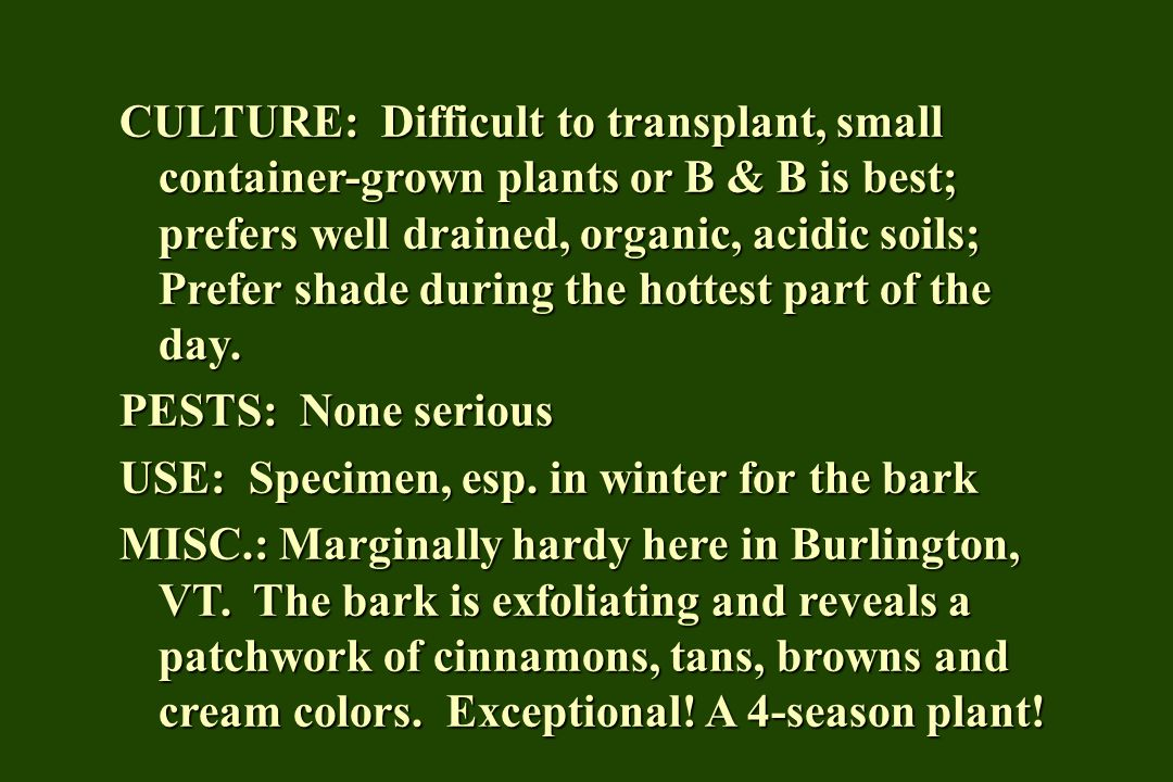 CULTURE: Difficult to transplant, small container-grown plants or B & B is best; prefers well drained, organic, acidic soils; Prefer shade during the hottest part of the day.