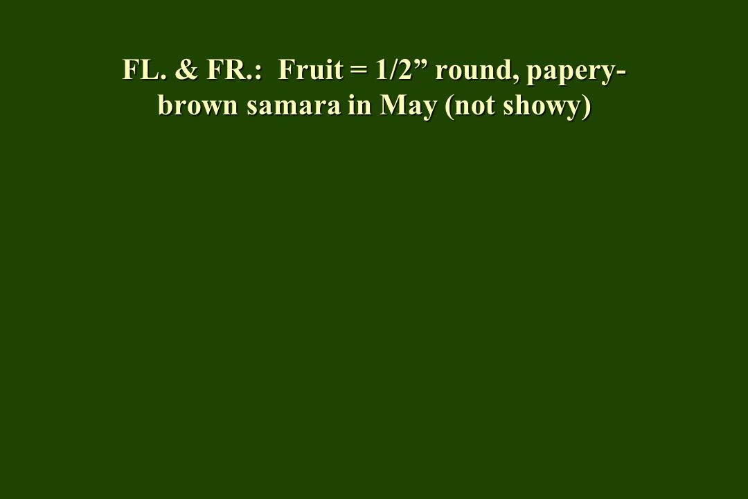 FL. & FR.: Fruit = 1/2 round, papery- brown samara in May (not showy)