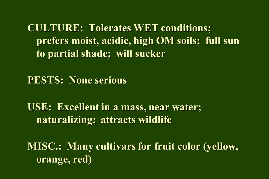 CULTURE: Tolerates WET conditions; prefers moist, acidic, high OM soils; full sun to partial shade; will sucker PESTS: None serious USE: Excellent in a mass, near water; naturalizing; attracts wildlife MISC.: Many cultivars for fruit color (yellow, orange, red)