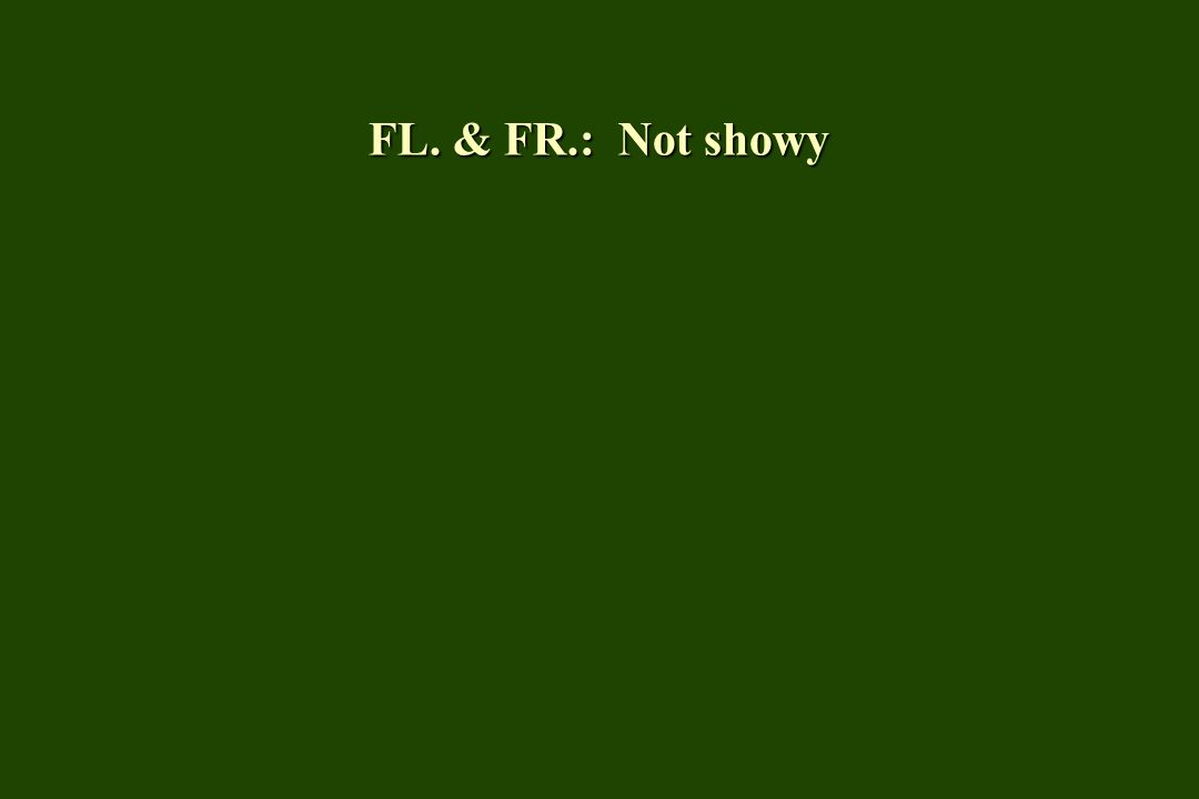 FL. & FR.: Not showy