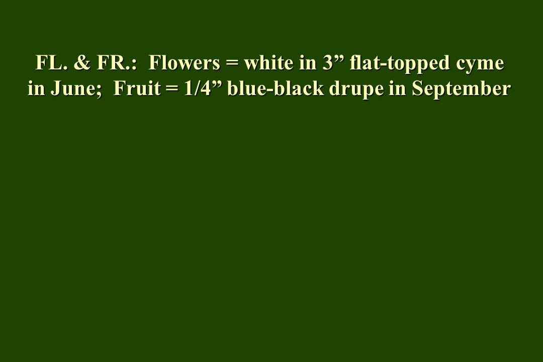 """FL. & FR.: Flowers = white in 3"""" flat-topped cyme in June; Fruit = 1/4"""" blue-black drupe in September"""