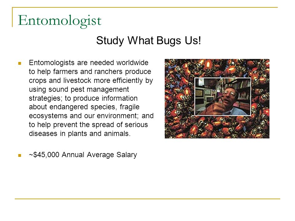 Entomologist Entomologists are needed worldwide to help farmers and ranchers produce crops and livestock more efficiently by using sound pest management strategies; to produce information about endangered species, fragile ecosystems and our environment; and to help prevent the spread of serious diseases in plants and animals.