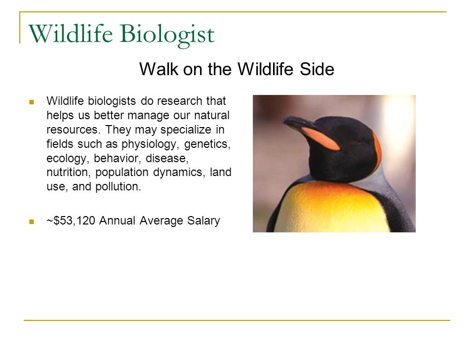 Wildlife Biologist Wildlife biologists do research that helps us better manage our natural resources.