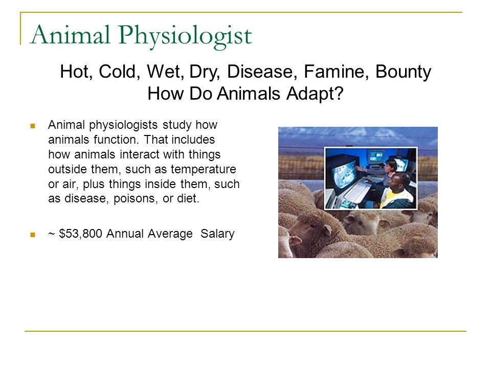 Animal Physiologist Animal physiologists study how animals function.