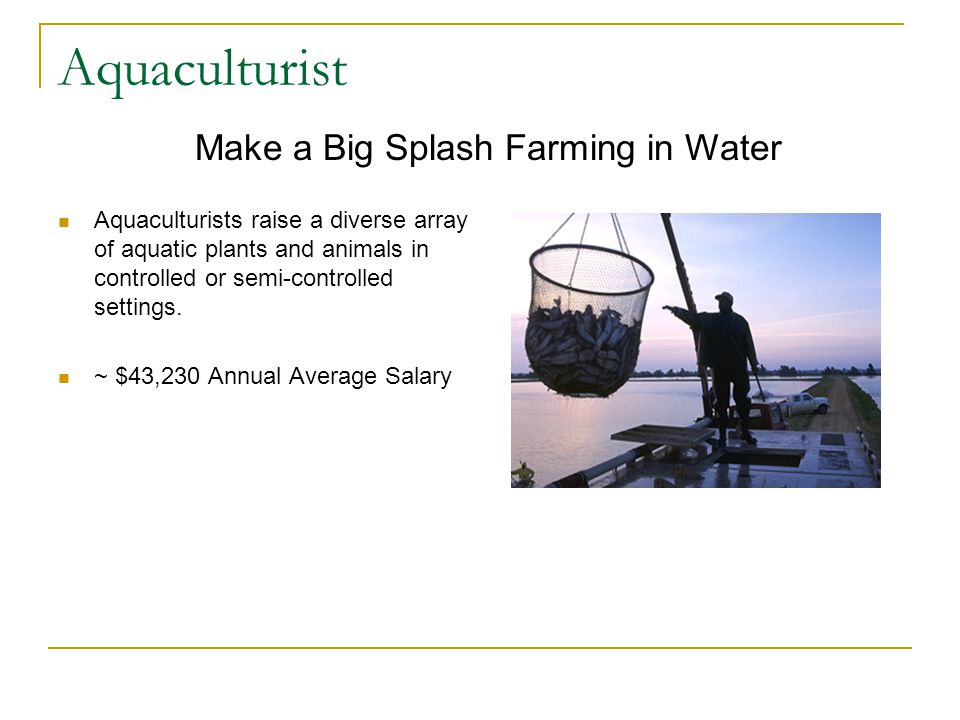 Aquaculturist Aquaculturists raise a diverse array of aquatic plants and animals in controlled or semi-controlled settings.