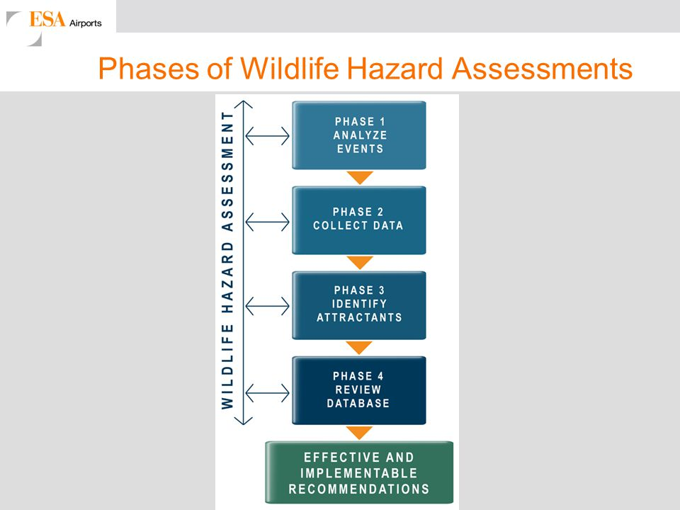 Phases of Wildlife Hazard Assessments