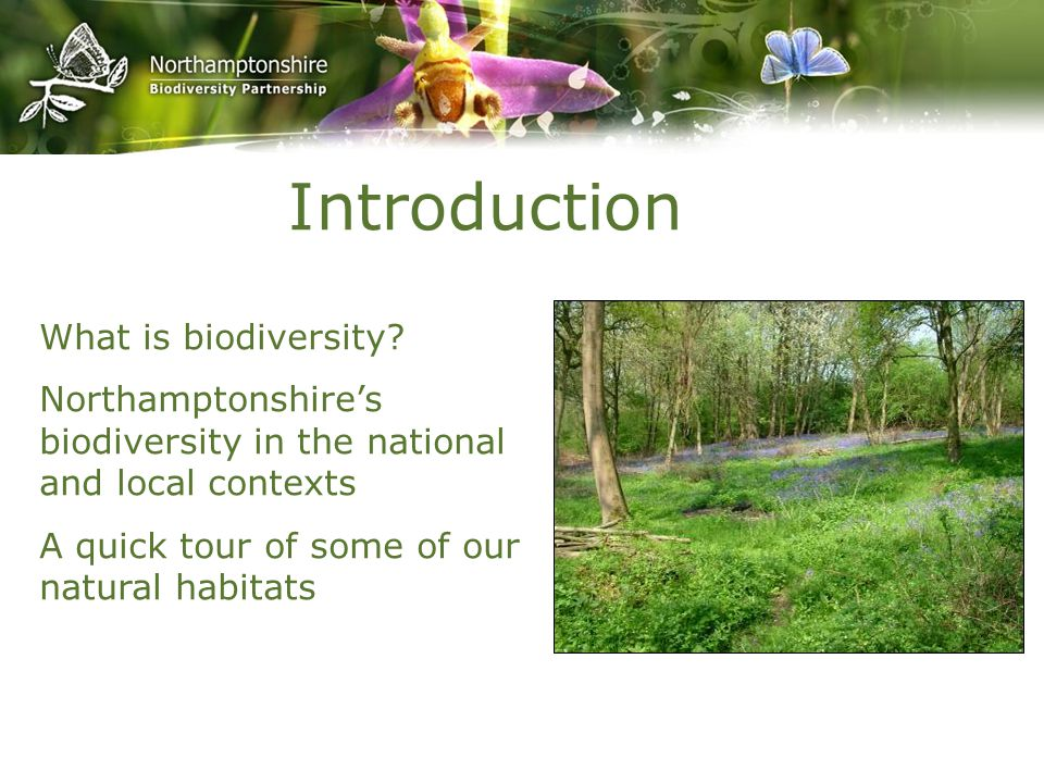 Introduction What is biodiversity? Northamptonshire's biodiversity in the national and local contexts A quick tour of some of our natural habitats