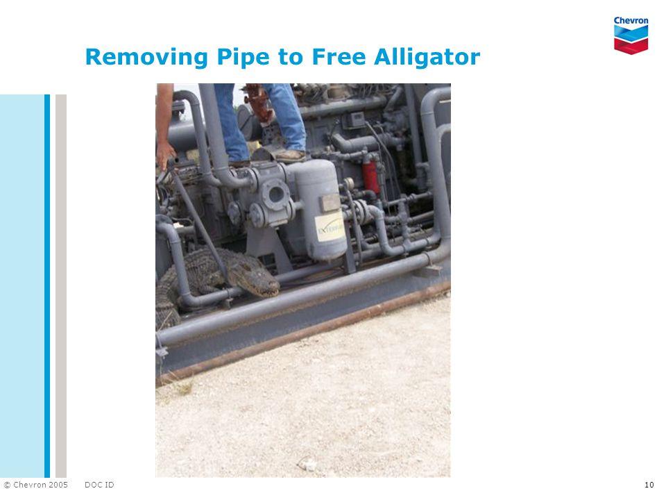 DOC ID © Chevron 2005 10 Removing Pipe to Free Alligator