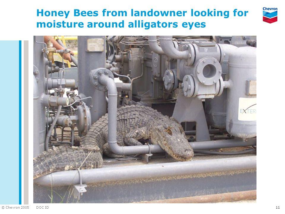 DOC ID © Chevron 2005 11 Honey Bees from landowner looking for moisture around alligators eyes
