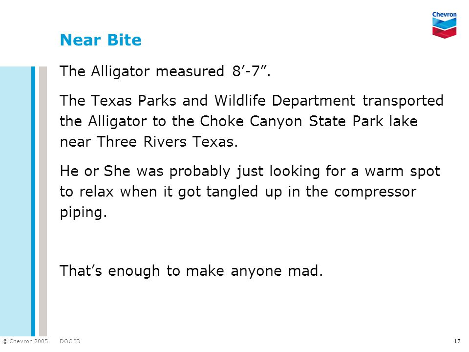 DOC ID © Chevron 2005 17 Near Bite The Alligator measured 8'-7 .