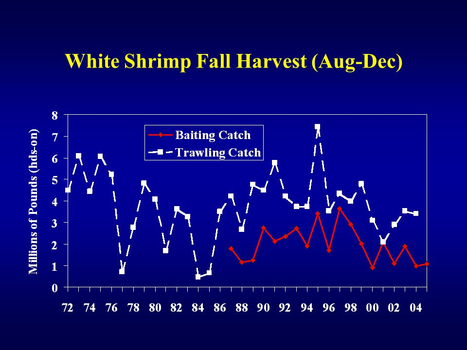 White Shrimp Fall Harvest (Aug-Dec)