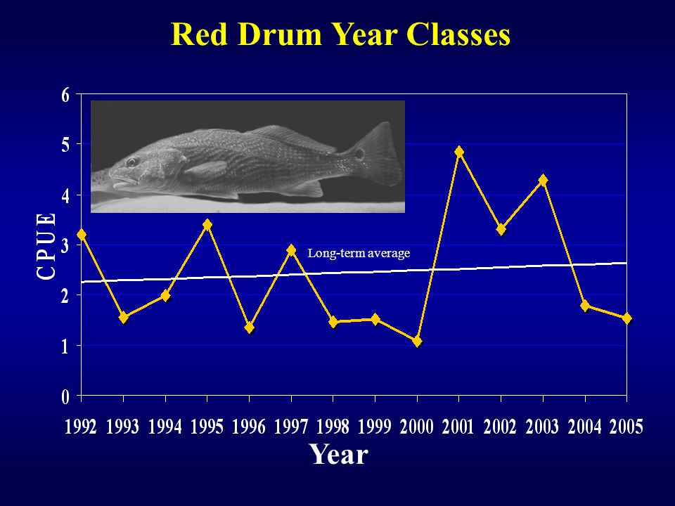 Year Long-term average Red Drum Year Classes