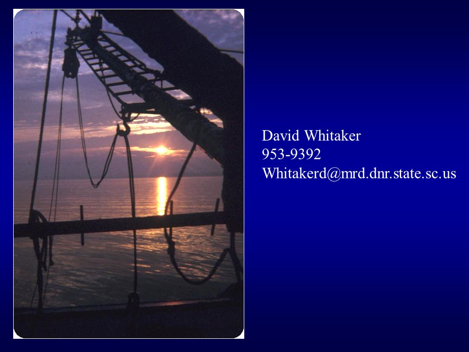 David Whitaker 953-9392 Whitakerd@mrd.dnr.state.sc.us