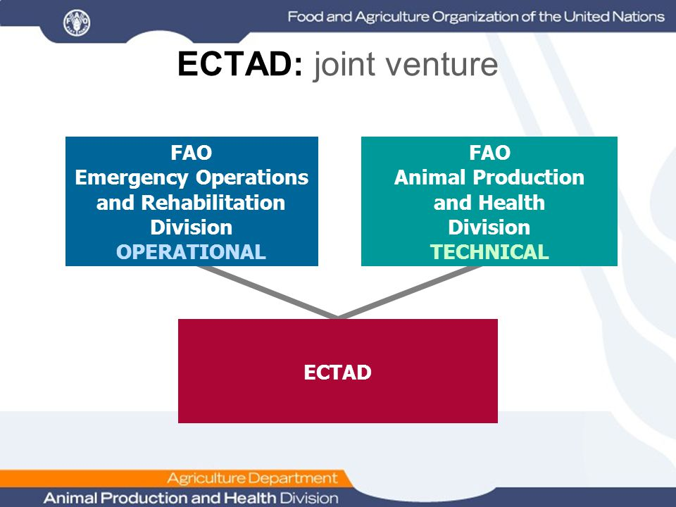ECTAD: joint venture FAO Emergency Operations and Rehabilitation Division OPERATIONAL ECTAD FAO Animal Production and Health Division TECHNICAL
